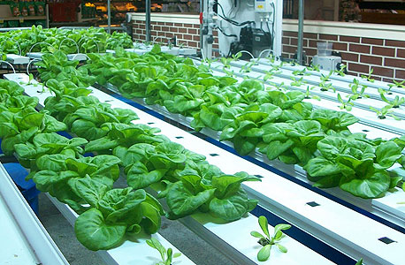 "Giant Eagle Market District, ארה""ב. גן ירק בתוך מתחם הקניות"