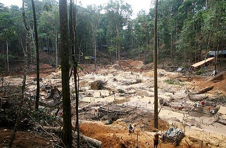 יער האמזונס. לוחמי האקולוגיה עוזרים לחברות לשלב את עקרונות הקיימות בהתנהלות העסקית שלהן
