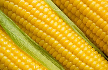 """הבצורת מחריפה: משרד החקלאות בארה""""ב צופה ירידה של 17% בייבול התירס"""