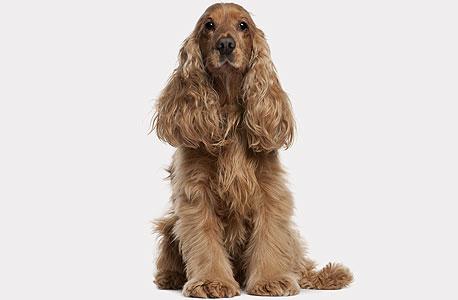 אם מראים לכלב חכם תמונה, הוא יידע לרוץ ולהביא את החפץ שמופיע בה
