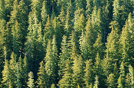 יער, צילום: shutterstock