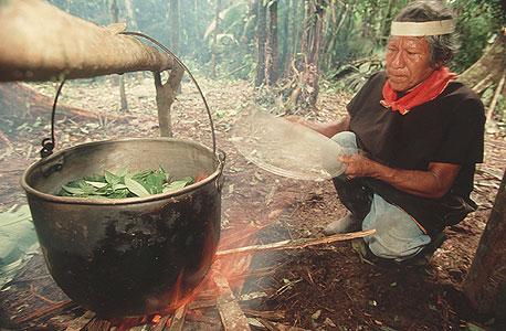 אינדיאני באמזונס מכין חליטת אייהואסקה. רק לאחרונה פג הפטנט, והשימוש של הילידים שב להיות חוקי