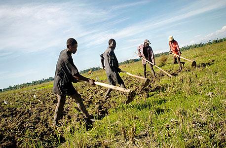 חקלאים בהאיטי. הקשיבו היטב לעמיתיהם המפגינים בהודו