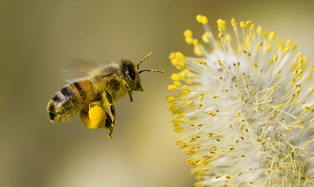 Pollination (illustration). Photo: Shutterstock