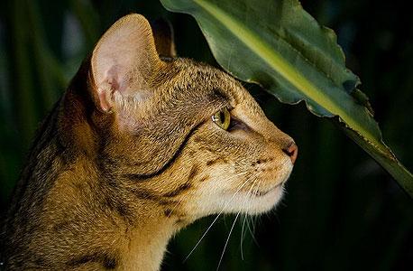 בתמונה: חתול רחוב שלא קשור למגה