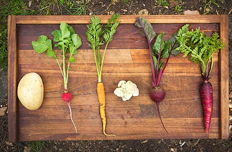 """הירקות שלוקטו. """"אפשר ללקט צמחי בר למאכל בכל מקום, אפילו בלב תל אביב. צריך רק לדעת מה לקטוף ואיך"""""""