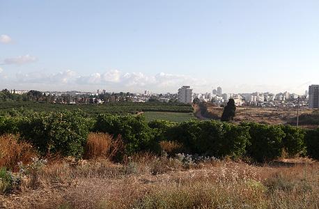 השטח החקלאי שבבעלות משפחת דמאג'י. כאן תקום שכונת ענק