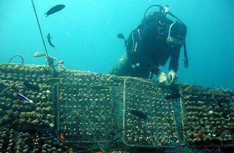 שונית אלמוגים, צילום: יעל הורושובסקי פרידמן