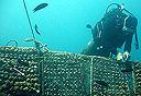 שונית אלמוגים (ארכיון), צילום: יעל הורושובסקי פרידמן