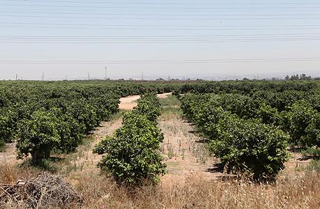 """קרקע חקלאית במרכז הארץ. הצורך לעגן את זכויות המתיישבים בהסכמי חכירה לדורות הוכר ע""""י מנהל מקרקעי ישראל כבר בהחלטות משנת 1989"""