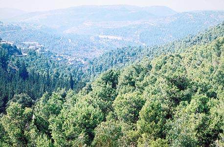 יער ירושלים. מטיילים לא הבחינו בבית