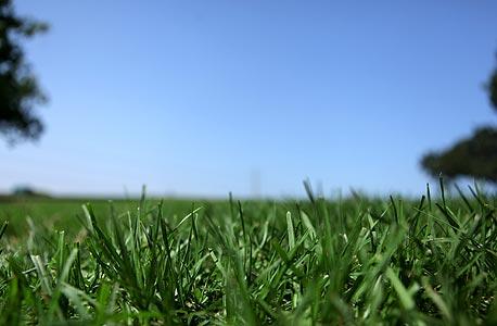 הדשא מפרגן: צמחים בעלי קרבה משפחתית, כגון עשבים בכר דשא, מרחיקים את שורשיהם זה מזה. צמחים אחרים מקרבים את שורשיהם בתחרות על משאבים