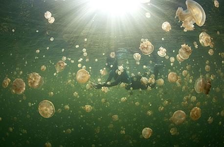 אגם המדוזות, איי פלאו, צילום: שאטרסטוק