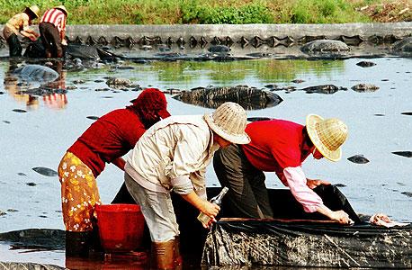 החקלאות הסינית ברובה עדיין מבוססת על עבודת כפיים