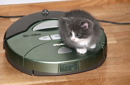 הרומבה גם משמש ככלי רכב לחתולים