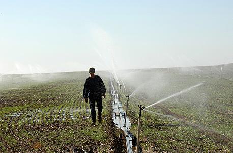 השקייה בחקלאות. הצרכנים הפרטיים משלמים גם על המגזר החקלאי