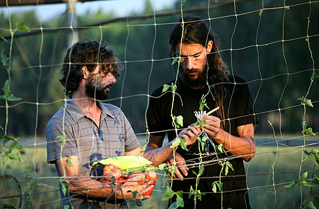 בלן (מימין) וסטפן עובדים בגינה השיתופית. לארוחת הצהריים אכלנו תבשיל טבעוני של עדשים, סלק ואפונה מהגינה