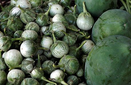 ירקות נדירים למסעדות