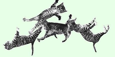 כל החתולים קופצים, רוקדים