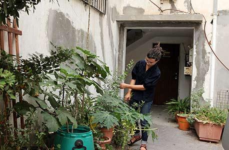 """הדירה האקולוגית של עץ בעיר בת""""א"""