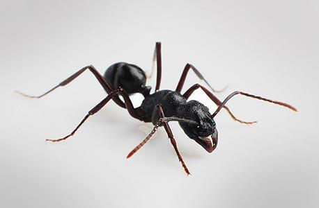 """""""הנמלה הבודדת לא צריכה אישורים מאף אחד"""""""