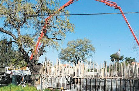 פרדס חנה: עצי האלון הפריעו לבנייה. שני עצי אלון תבור עתיקים שגילם מוערך ב-250 שנה גרמו לשינוי תוכניות הבנייה של בתים צמודי קרקע בפרדס חנה של היזם אלון עמרם. הפרויקט נמצא בבנייה