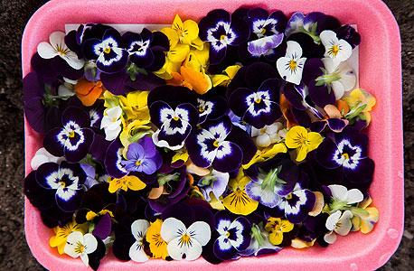 פרחי אמנון ותמר גמדיים אכילים , צילום: תומי הרפז