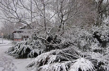 שלג במושב קשת