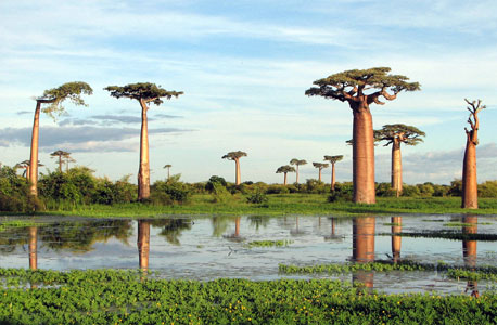 """לכבוד ט""""ו בשבט: עצים מרהיבים ברחבי העולם"""