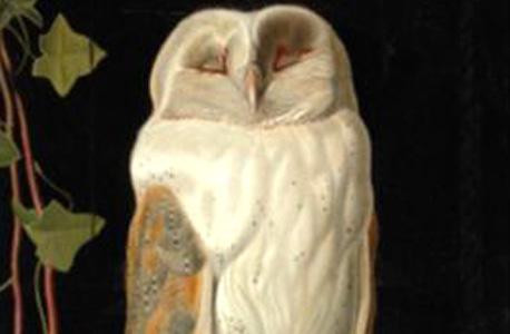 artmarketblog.com. נבכי שוק האמנות העולמי. בתמונה: Webbe White Owl