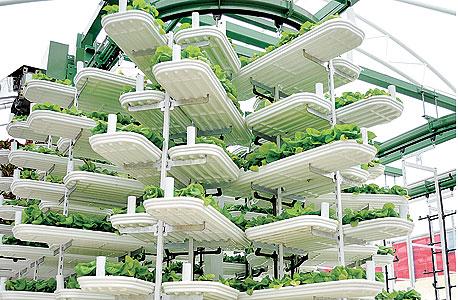 """חווה אנכית בגן החיות פיינטון באנגליה. דפומייה: """"ממשלות וגופים כמו הבנק העולמי צריכים להיות חלק מהמהפכה ולסבסד את זה חלקית, כפי שחקלאות מסובסדת היום כמעט בכל העולם"""""""