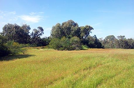 שטחים ירוקים (ארכיון), צילום: דב גרינבלט, החברה להגנת הטבע