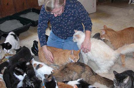 מאכילת חתולים. האם יידרש רישיון להאכיל?