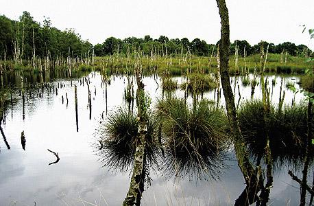 """The Swamp"" (גרמניה, 2008). ""זה בעצם נוף מנטלי. אין לי עניין בנוף. אני לא מתרגשת מעצים"""