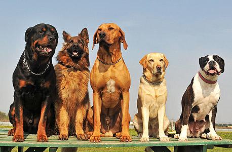 Dogs. Photo: Shutterstock