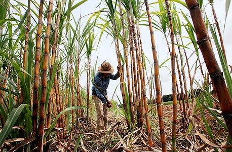 """מדד מחירי המזון של האו""""ם: הרמה הנמוכה ביותר מאז 2008"""
