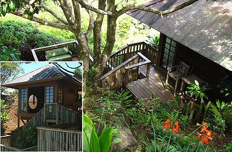 Maui tree house, מאווי הוואי. 180 דולר ללילה