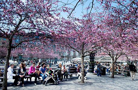 פארק בשטוקהולם. האוכלוסייה והמרחב הפיזי מושכים אנשים יצירתיים , צילום : אי פי איי
