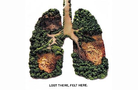 כריתת יערות אחראית ל-20% מפליטות הפחמן