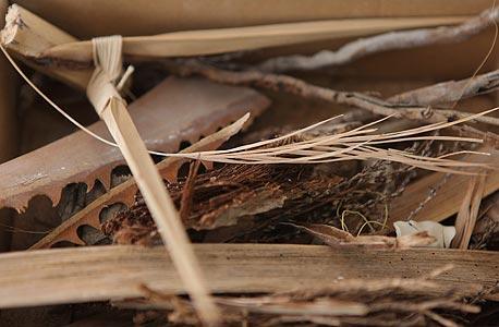 מוסף באזז קיץ מאיה בן דוד עץ תמר, צילום: עמית שעל