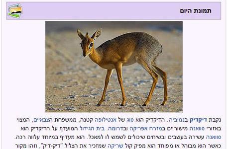 תמונת היום בוויקיפדיה העברית. נחשבת לאחת הגרסאות המוצלחות ביותר של האנציקלופדיה השיתופית