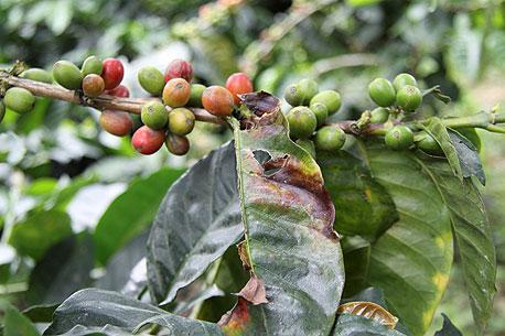 חילדון הקפה תוקף בקולומביה, ספטמבר 2012. המדינה עוד לא התאוששה מהמגיפה של 2008, צילום: רויטרס