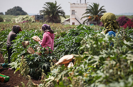 עובדת חקלאות בשדה של קיימא