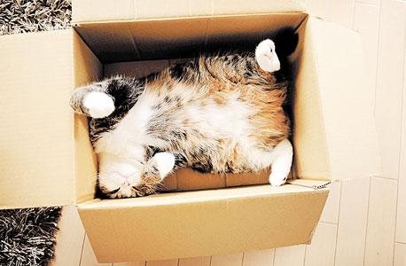 """מארו, חתול שכן כבש את העולם. """"בשני סרטוני חתולים, אחד יעורר יותר רגש"""""""