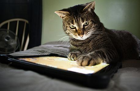 יש דברים שרק לחתול מותר, צילום: שאטרסטוק