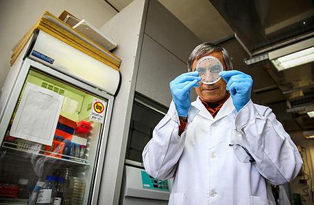 """קינן במעבדתו בטכניון עם צלחת פטרי שבתוכה פועל המתמר הביולוגי שלו, ומושבות חיידקים שגידולן מעיד על השלב בתהליכי החישוב. """"מודל ראשוני של מחשב מתקדם"""""""