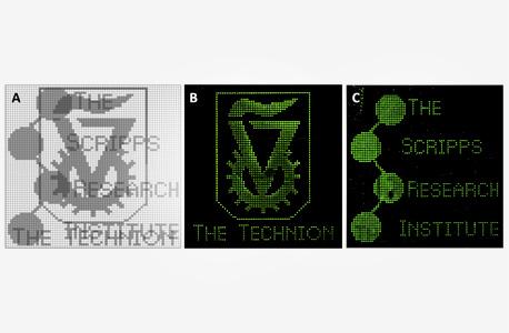 """""""מסך הדנ""""א"""" של קינן מקרין את סמלי הטכניון והמכון האמריקאי סקריפס. תוכנה בצורת חמיסה"""