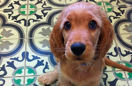 האם כלבים יודעים איזה יום היום?
