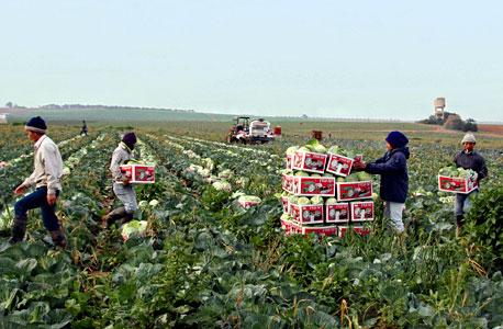 עובדים זרים מתאילנד בעוטף עזה. אין להעסיק עובד למטרה אחרת מזו הכתובה בהיתר, צילום: מיכאל קרמר