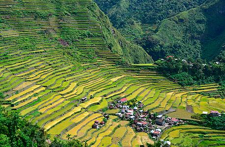 טראסות אורז בפיליפינים